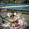 嵐山 渡月橋南詰