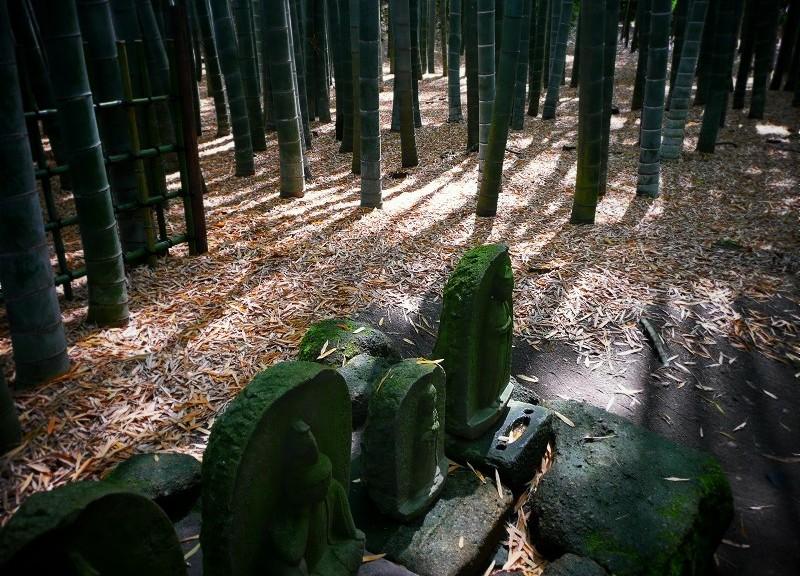 報国寺 竹の寺