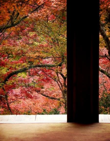 高山寺 石水院の紅葉